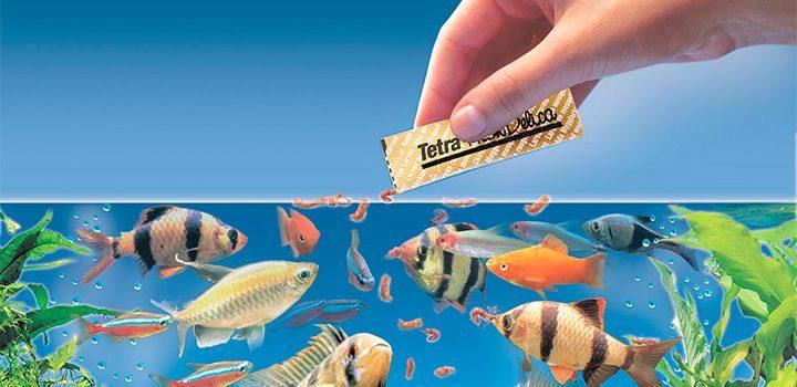 Alimentaci n de los peces for Peces alimentacion