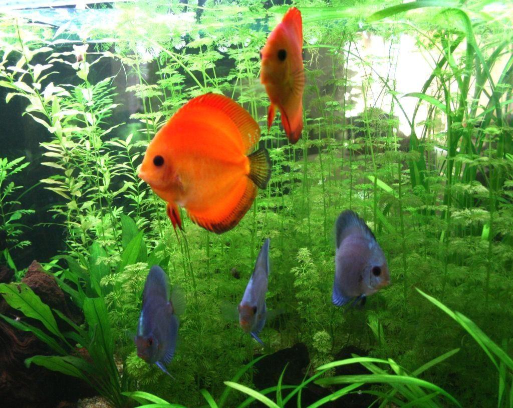 galeria pez: