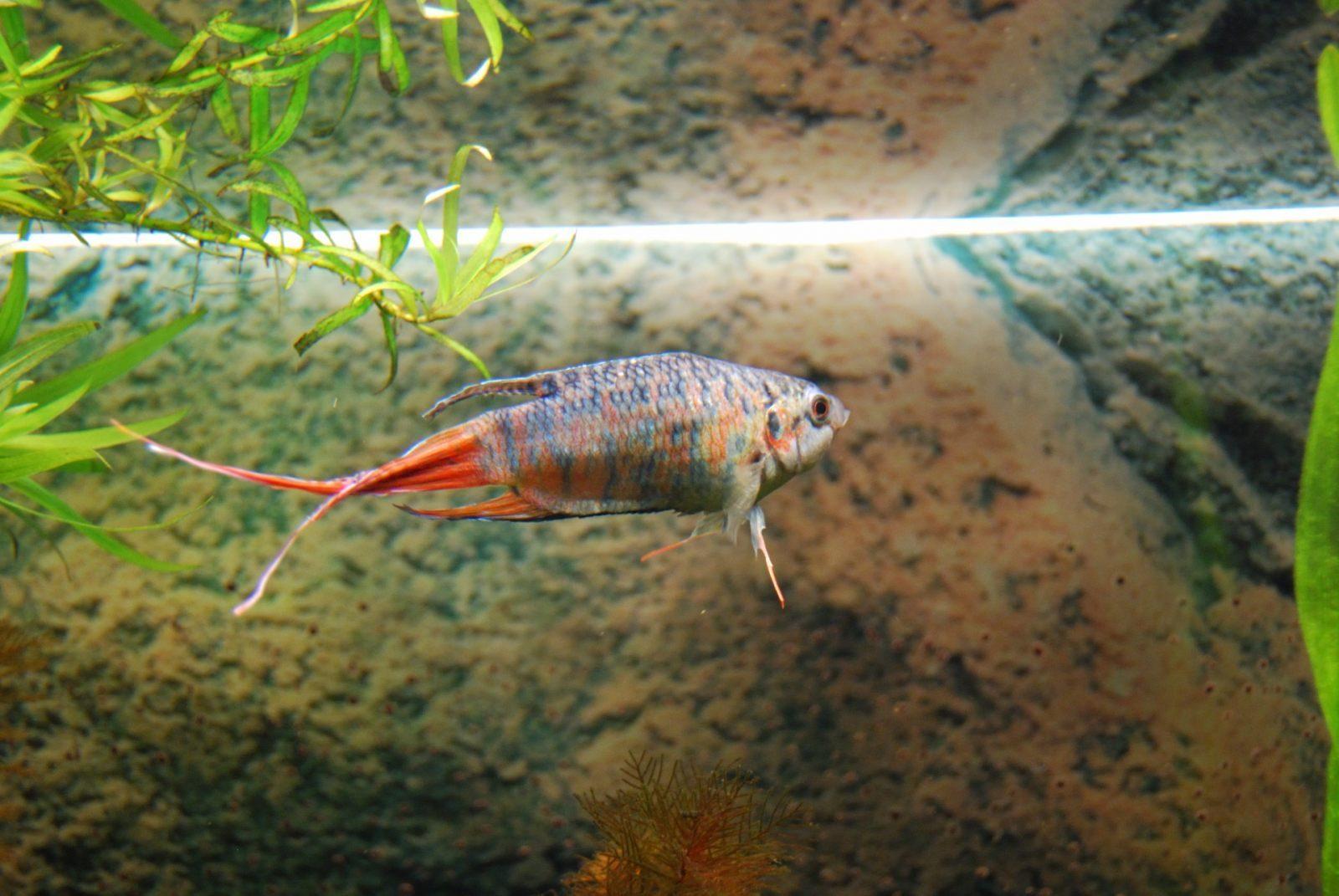 Peque o pez del para so im genes y fotos for Pez koi pequeno